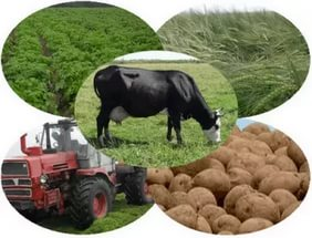 Agricultural business in Soverato buy