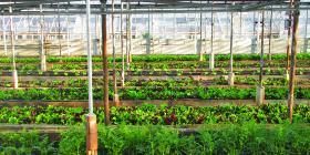 Рулоны с семенами для ленивых огородников