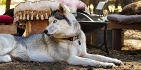 Производство мебели для домашних животных