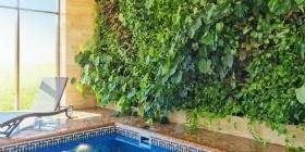 Вертикальные сады или фитостены