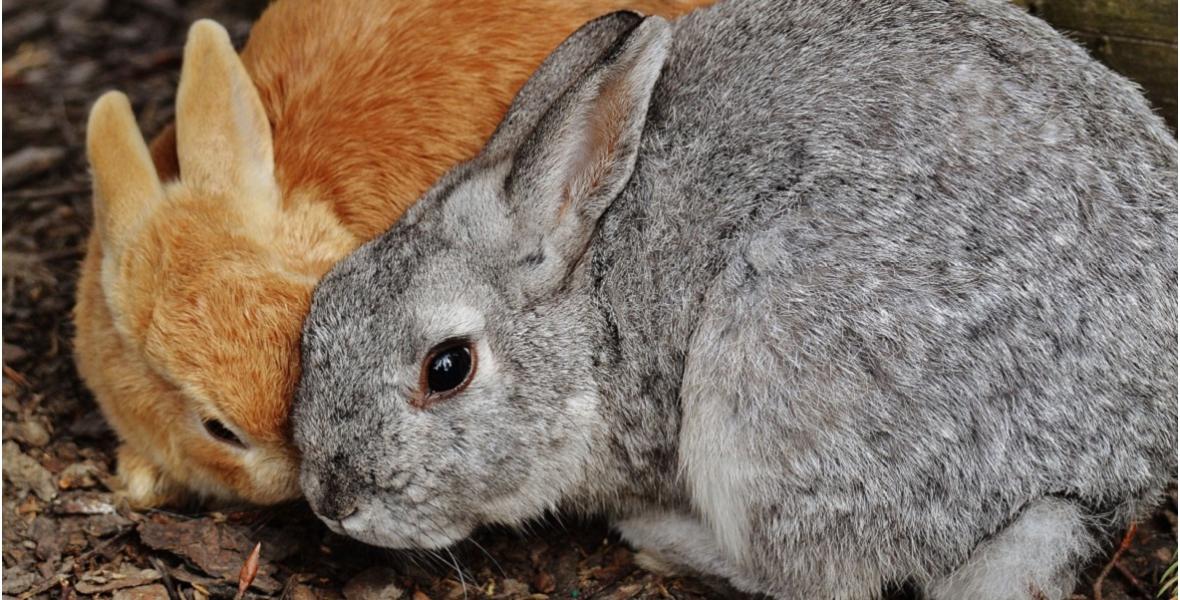 Инструкция по разведению кроликов скачать