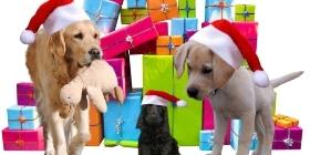 Изготовление игрушек для животных