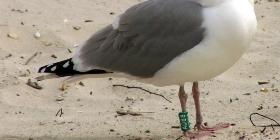 Производство и продажа колец для птиц